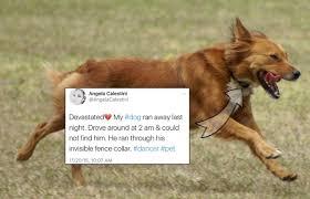 dog fence blog dog fences