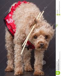 chopsticks for hair chopstick cutie royalty free stock photo image 36210585