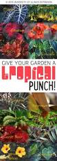 learn how to give your garden a tropical punch gardening