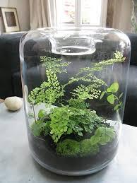 best 25 terrarium ideas on pinterest diy terrarium terranium