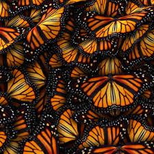 heaps of orange monarch butterflies fabric bonnie phantasm