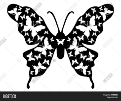 butterfly floral background vector photo bigstock