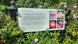 stop and smell the roses the bronx botanical garden kendra the