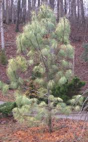 12 best top 10 native plants for fall in nw arkansas images on