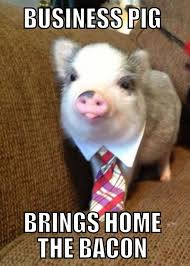 Funny Bacon Meme - business pig brings home the bacon funny meme picture