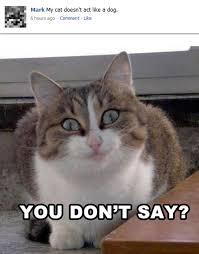 Best Memes 2014 - catdoesnotactlikedog