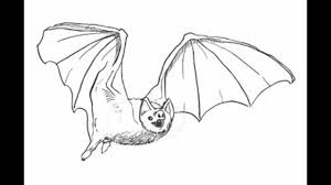 how to draw a bat step by step youtube