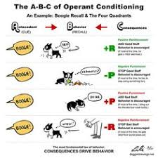 classical conditioning a basic form of learning my boys bruno