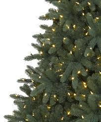 alberta spruce tree tree classics