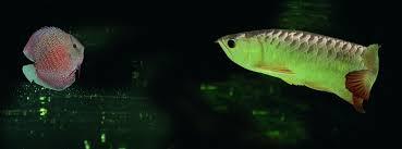 fish farming goes hi tech singapore magazine