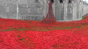 poppies at the tower of london blood swept lands and seas of red