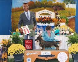 belgian sheepdog club of america national specialty national owner handled series american kennel club