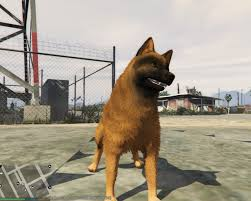 belgian shepherd video german and belgian shepherd textures for husky player u0026 ped