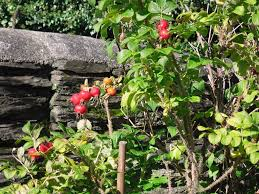 plants for shade greenfingers homes for wildlife the rspb
