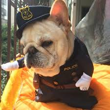 Frenchie Halloween Costume Halloween Cat Dog Police Costume Hilarious Animal Halloween Cat