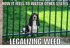 Legalize Weed Meme - how it feels to watch other states legalizing weed meme on me me