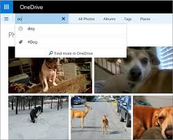 Dog Photo Albums Organize And Find Photos In Onedrive Onedrive