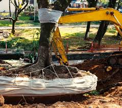 affordable tree service crossville tn does homeowners insurance cover tree removal after a