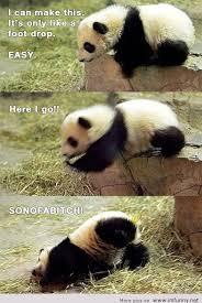 Panda Meme Mascara - here i go jpg