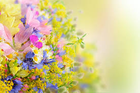 best flower wallpaper in the world high quality full hd flowers of