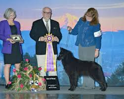 belgian sheepdog national specialty verseau belgian sheepdogs u2013 these pages are devoted to my belgian