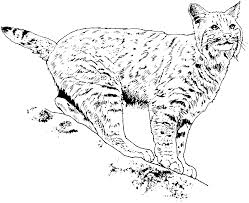 bobcat outline images reverse search