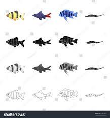 types of aquarium different types aquarium sea fish barbeque stock vector 714913429