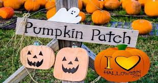 www pumpkin must see pumpkin patches throughout the u s i love halloween