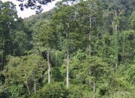 Plants In The Tropical Rain Forest - exploring the kingdom of plants yunnan tourism website