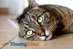 flooring direct flooring direct