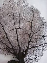 dried sea fans for sale regina b dunn looking for deeper meanings answer to the thermofax