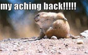 Gopher Meme - he could gopher a visit to the caringbah chiropractic centre