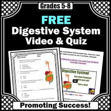 free download digestive system video and worksheet science human
