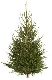 medium norway spruce cut christmas tree departments diy at b u0026q