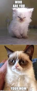 Grumpy Cat Meme Generator - grumpy cats meme generator imgflip crazy cats pinterest