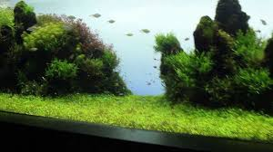 Beautiful Home Fish Tanks by Most Beautiful And Famous Aquarium In The World Youtube