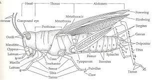 grasshopper external diagram