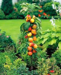 Edible Garden Ideas Edible Landscape Plants And Trees Ornamental Fruit Trees Practical