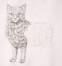 drawn fur drawing cat fur pencil and in color drawn fur drawing