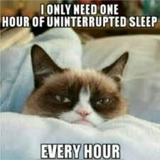 Sleeping Cat Meme - grumpy cat needs on hour of uninterrupted sleep every hour