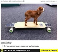 Skating Memes - funny figure skating memes figure best of the funny meme