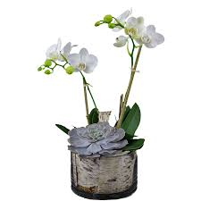 Orchid Cut Flowers - orchid 1212 ariston flowers and boutique