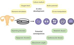 the impact of culture on epigenetic properties of pluripotent stem