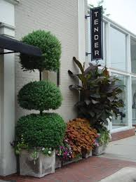 Ny Topiary - 47 best topiary images on pinterest topiaries planting and