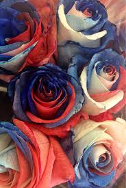 best 25 blue roses ideas on pinterest beautiful roses black