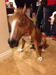 Horse Head Mask Meme - irti funny picture 2829 tags dog horse head mask horse costume