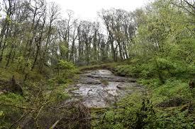 Barnhill Rock Garden by Lydford Gorge After The Rain Treksandtors