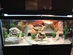 bearded dragon lighting guide too much light bearded dragon forum