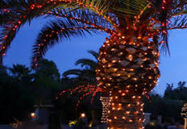 palm tree decorating for by custom lights