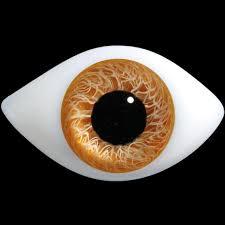cuisine plus lens egg shell d400 elongated oval low lens glass doll